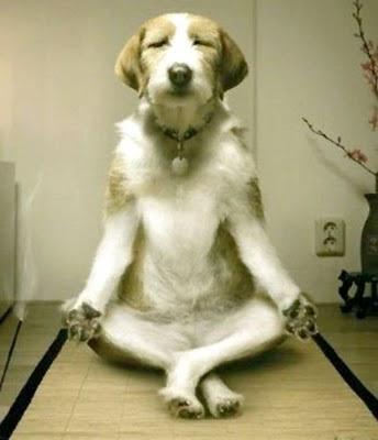 inner-peace-dog